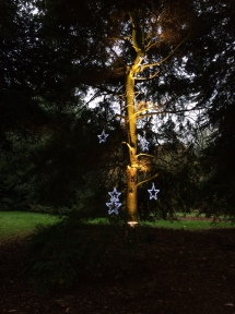 Kew star tree