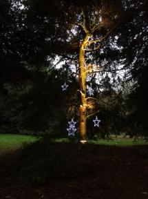 Kew star tree
