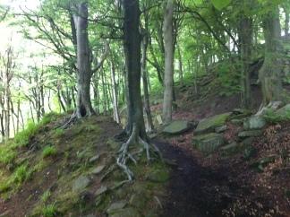 Mill path