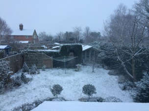 snowy back