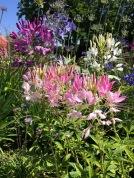 Goodnestone flowers 1
