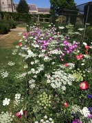 Goodnestone flowers