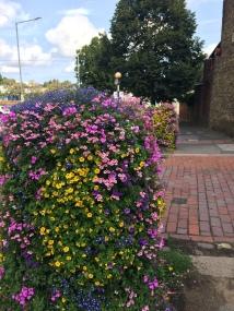 Faversham flowers