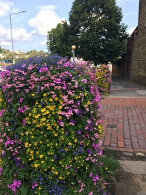 Faversham flowers