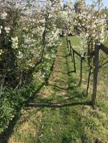 Farm track 2