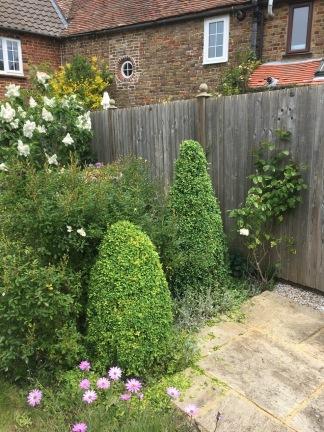 Box topiary 2